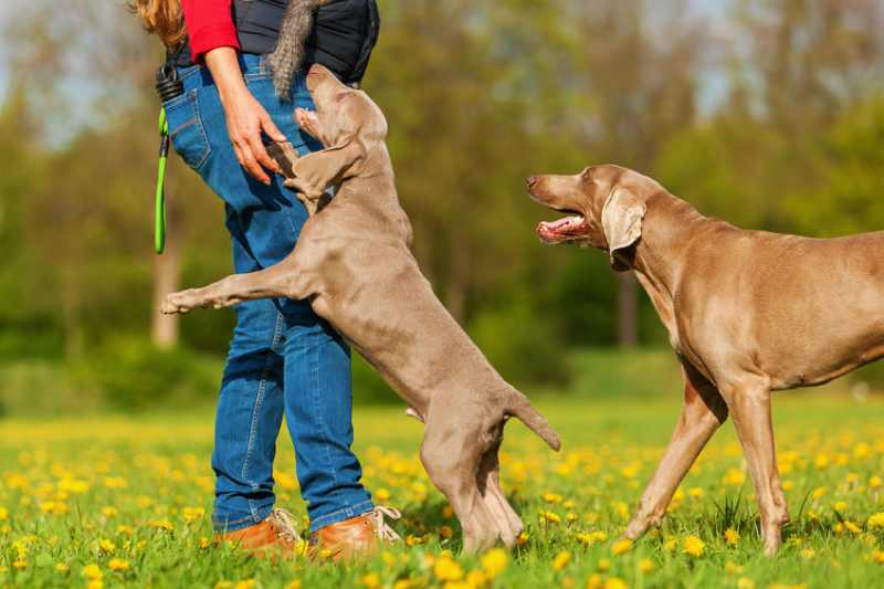 Learn how to stop a dog from jumping on people