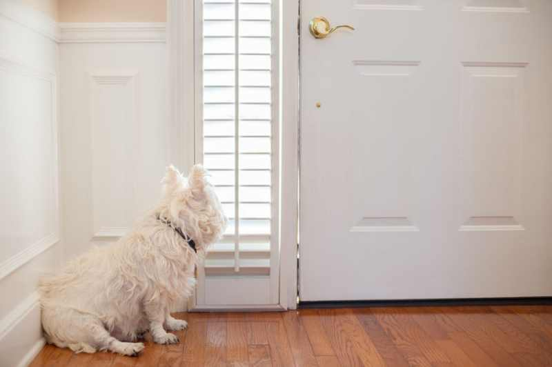 Discover how stop a dog from jumping on people when they come through the door.